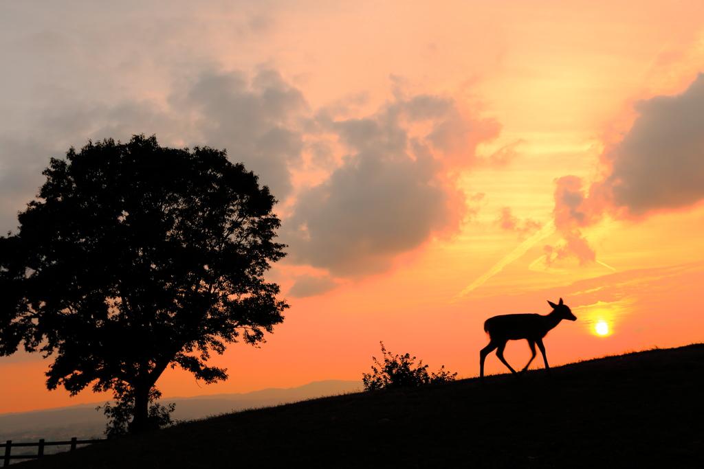 影絵のバンビ