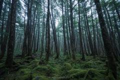 雨降る苔の森