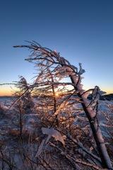 染まる樹氷