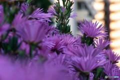集合住宅の花