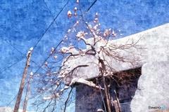 雪国の青い空2 1976/12/30