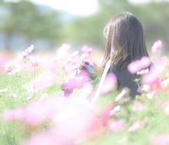 コスモス畑のカメラ女子