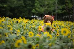 花になりたい乙女