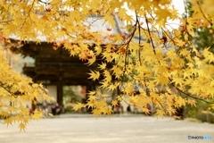 京都  神護寺山門にて