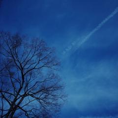 けやきと飛行機雲
