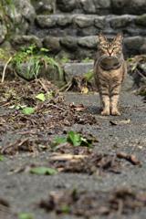 田貫湖の猫