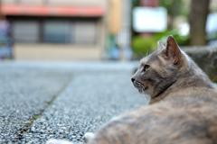 茶屋街の猫