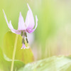 fairy in spring