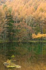 湖底の緑を写して