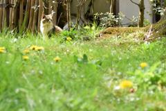春の外猫さん