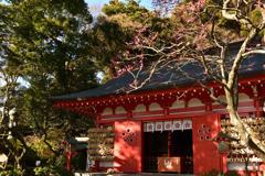 紅梅重なる荏柄神社