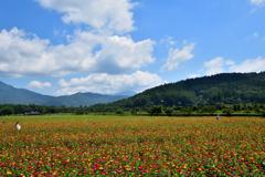 お花畑と夏の空