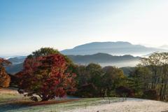 朝陽浴びる七色大カエデ