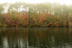 霧煙る紅葉