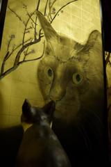 屏風絵と猫