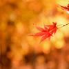 秋色に包まれて