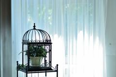 窓辺の鉢植え