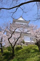 城下の桜を仰ぎ見る