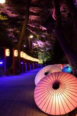 夜桜に和傘を添えて