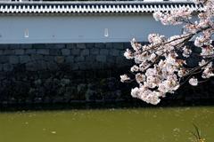 お堀にかかる桜枝