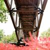 赤絨毯を渡る橋