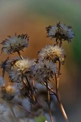 winter wild grass