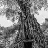 樹木に飲み込まれる寺院