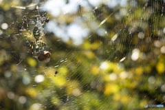 蜘蛛が支配した世界