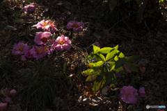 春に散る花もある