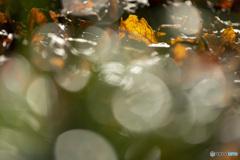 キラキラ☆彡落ち葉♪