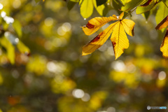夏の終わりはそれ即ち秋の始まり