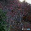 秋と冬のハザマ