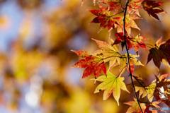 霧降高原の紅葉