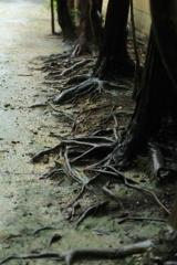 雨に濡れた木の根