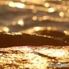 黄昏のパール