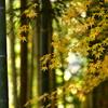 竹とモミジ