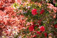 凛とした あの日の君のような 儚い花