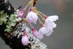 In un fiore4