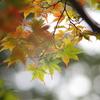 Early autumn2