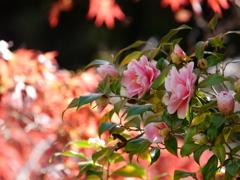 いつか見た あの日の君のような 美しい花