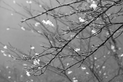 Flower like snow