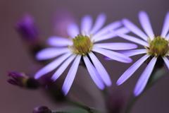 淡く囁く紫2