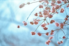 光 のどけき 春の日に・・・