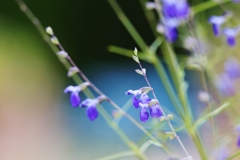 blue ♪