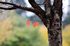 ちいさい秋 ちいさい秋 み~つ~けた~♪