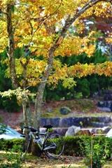秋の日 2 ♪