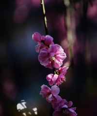 花 の 心