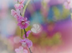 春 の 詩(うた)