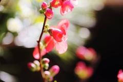 花 唄 ♪