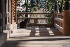 寺猫の昼下がり